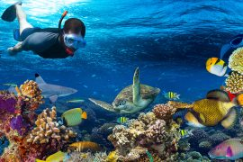 snorkel in cancun tour