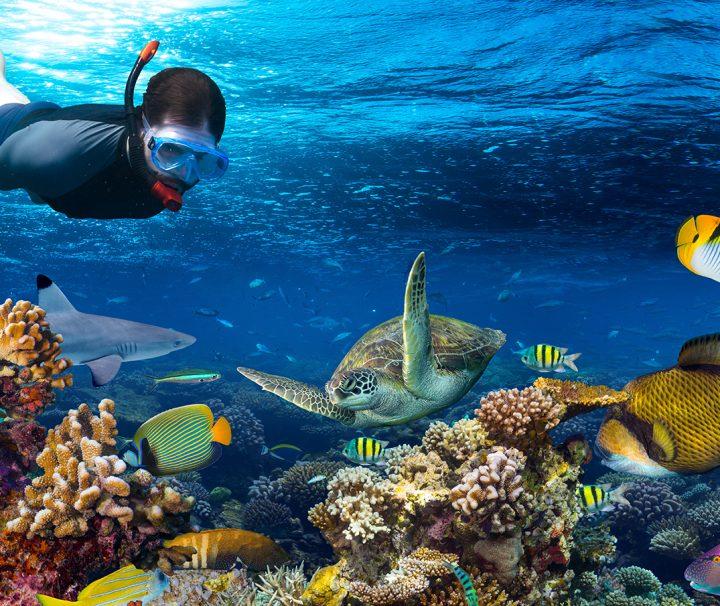 snorkel in cancun tour