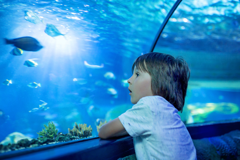underwater world for kids activities for christmas in cancun